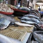 Ikan Laut Tangkapan Nelayan