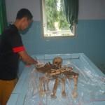 Petugas kamar jenazah menunjukkan kerangka manusia dari Desa Mororejo, Mlonggo Kemarin.