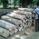 Alat bukti berupa kayu siap jual di amankan polisi