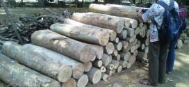 Pelaku Illegal Logging Di Jepara Tertangkap