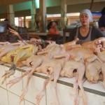 Penjual ayam di Pasar Jepara Satu (Ratu) tengah menjajakan dagangannya.