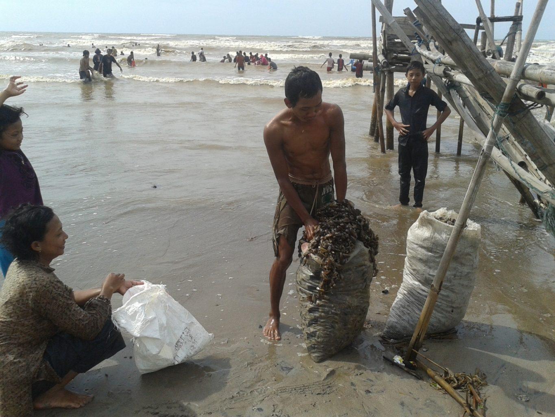 Ribuan Karang Terdampar Di Pantai Mororejo Jepara