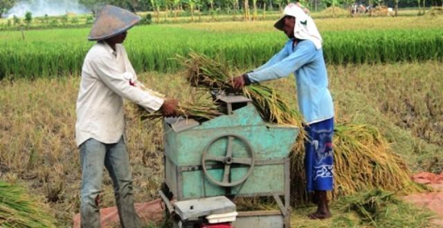 Hasil Pertanian Jepara 40 Persen Dijual Ke Luar Daerah