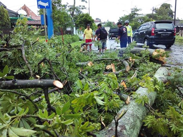 Tersapu Angin Pohon Besar Roboh